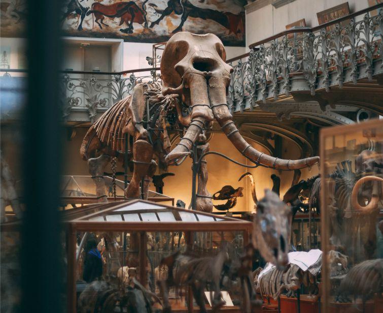 Percakapan Bahasa Inggris Tentang Museum Arkeologi Untuk 2 Orang