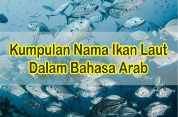 Kumpulan Nama Ikan Laut Dalam Bahasa Arab dan Artinya