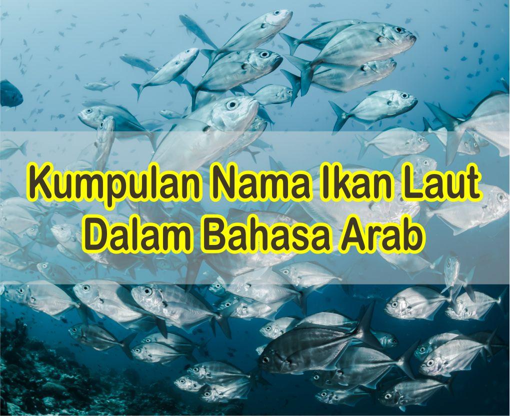 Nama Ikan Laut Dalam Bahasa Arab Dengan Artinya B. Indonesia